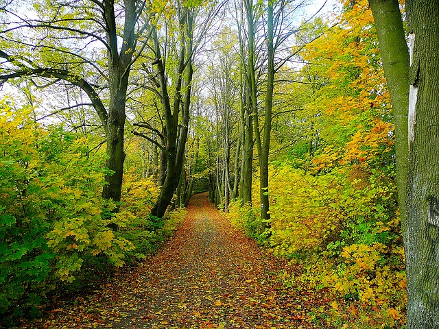 Try forest bathing to renew your spirit. Image of path in wooded area.